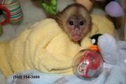 Замечательное милые обезьяны
